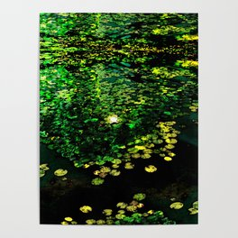 the Water Lilly Poster