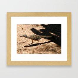 Roadrunner Framed Art Print
