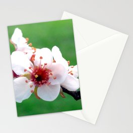 Best Friends Stick Together Stationery Cards