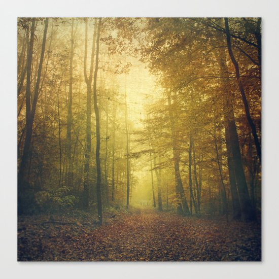 fall morning forest Canvas Print