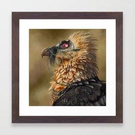 Necrophagy: Bearded Vulture Framed Art Print
