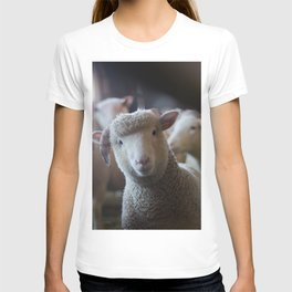 Sheep Looking at Camera T-shirt