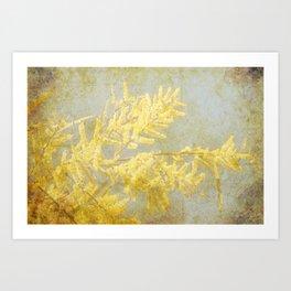 Golden Wattle Art Print