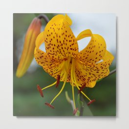 Yellow Spotted Lily by Teresa Thompson Metal Print