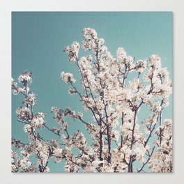 Bloomed 1 Canvas Print