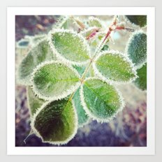 Frosty Rose Art Print