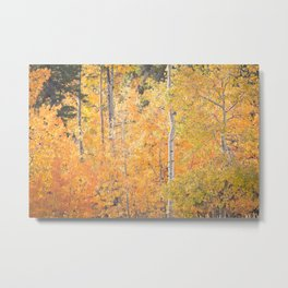Autumn's Grand Display Metal Print