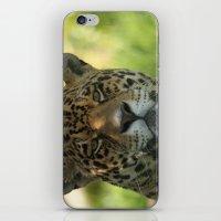 jaguar iPhone & iPod Skins featuring Jaguar by Sean Foreman