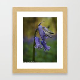 Bluebells and Blurs Framed Art Print