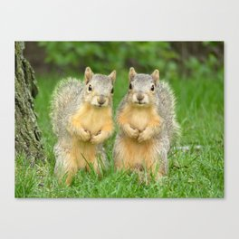 Squirrels-Brothers Canvas Print