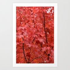 Vivid Autumn Leaves Art Print