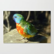Scarlet-Chrested Parrot (Neophema splendida) Canvas Print