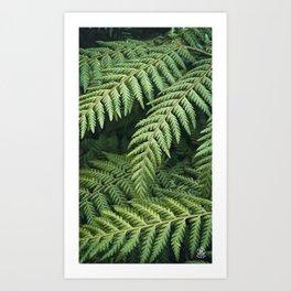 Ferns Art Print
