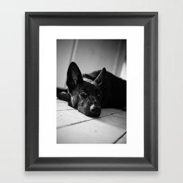 Dog German Shepherd  Framed Art Print