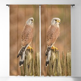 Perched Raptor Blackout Curtain