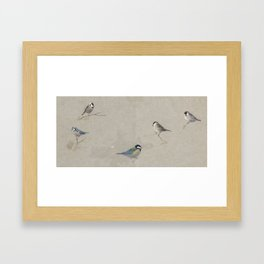 Archibald Thorburn (1860-1935)  Blue, Coal, Great, Marsh and Willow tits Framed Art Print