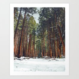 The Winter Forest (Color) Art Print