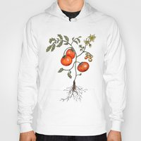 botanical Hoodies featuring Tomato Botanical by CHAR ODEN