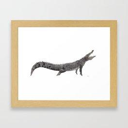 American Crocodile Framed Art Print
