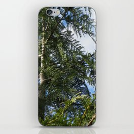 Sky through Cedar iPhone Skin