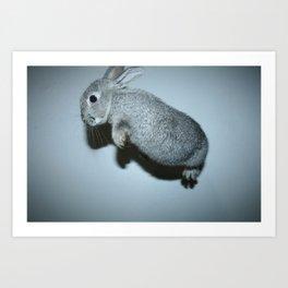 The Flying Rabbit Art Print