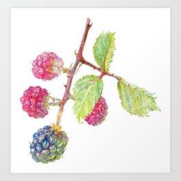 Wild Blackberries Art Print