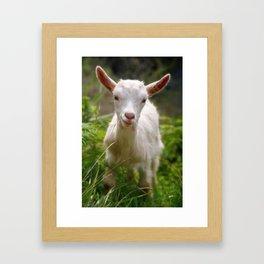 Baby goat Framed Art Print