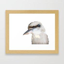 Laughing Kookaburra - Dacelo novaeguineae Framed Art Print