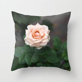 Flower Photography by Raspopova Marina Throw Pillow
