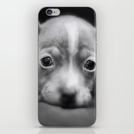 Tiny Chihuahua iPhone Skin
