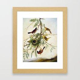 Joseph Bartholomew Kidd Orchard Oriole Framed Art Print