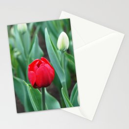 Spring flowers blooming in April and May on lawns, bushes and trees in the city park. Stationery Cards