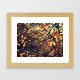 Happenings Framed Art Print