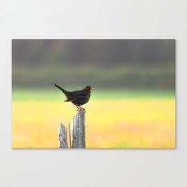 Blackbird on a Wooden Post Canvas Print