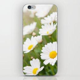 White chamomiles herb flowering plant iPhone Skin