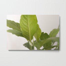 Hojas verdes (2) (green leafs) Metal Print