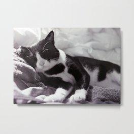 Cat at ease Metal Print
