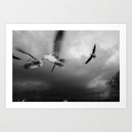 RiverGulls - 2 Art Print