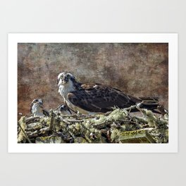Osprey and Young - Feeding Art Print