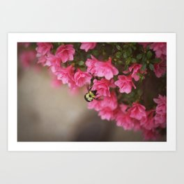 Top View Bumblebee Art Print