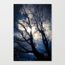 Shadow of the tree Canvas Print