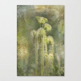 Fiddle Head Canvas Print