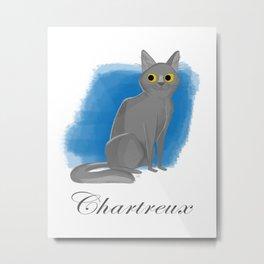 Chartreux Metal Print