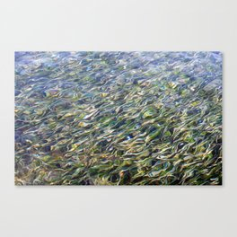 Sea Grass Through Rippling Water Canvas Print