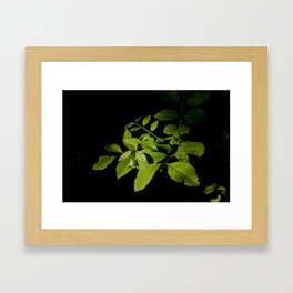 Orange Leaves Framed Art Print