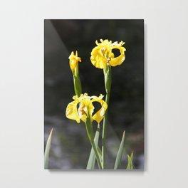 Spring - Iris Yellow Metal Print