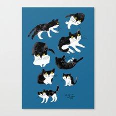 cat study Canvas Print