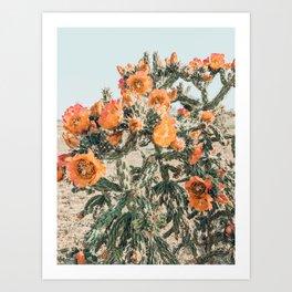 Orange Flowering Cactus Art Print