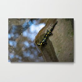 Salamander about to swim Metal Print