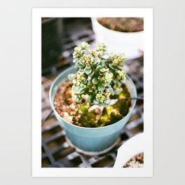 Greenhouse Succulent Art Print